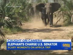Coons' Africa Convoy Charged By Elephants