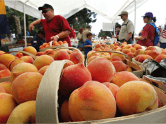 A couple of last thoughts about the Peach Festival